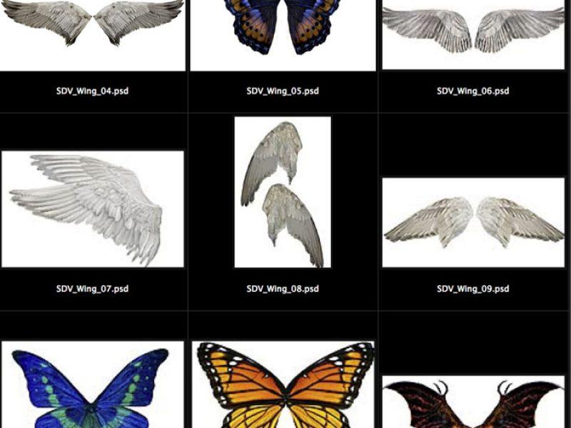 wings_sm
