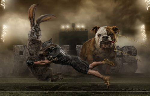 Bulldog Sports Background Collection